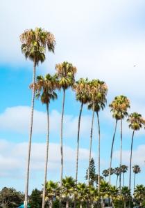 California trees low
